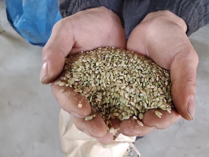 【脱穀した玄米】